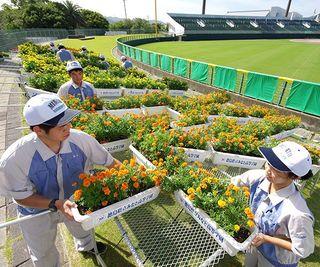 熱戦の舞台花で彩る みなと学園生 高校野球徳島大会あす開幕