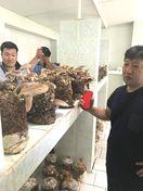 徳島のキノコ業者、欧州で生産・販売へ