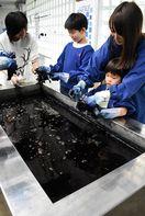 「阿波藍」日本遺産に認定される
