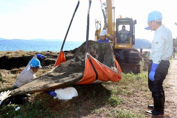骨格標本にするため掘り出されたマッコウクジラの頭部の骨=阿南市中林町の中林海岸