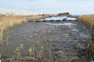 国土交通省が整備した人工干潟。生物の生息状況が自然干潟の時と同水準に戻った=阿南市の那賀川河口