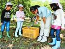 幼稚園児27人が クリ拾い楽しむ 池田高三好校の農場