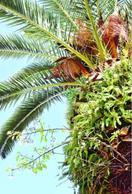 ヤシの幹からサクラ 徳島市の藍場浜公園