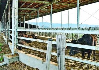 「和牛保護へ法整備を」畜産業者逮捕で同業者らに衝撃