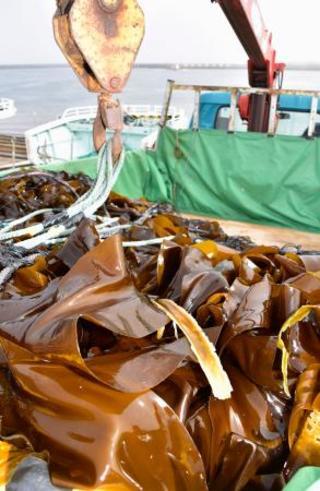 根室の233隻、コンブ漁に出漁