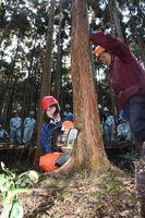 チェーンソーでヒノキを伐採する女子生徒=神山町神領の大粟山