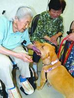 慰問したセラピー犬と触れ合う高齢者=徳島市中昭和町2の林内科