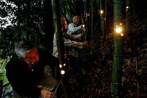 竹に穴を開けて取り付けたLEDを試験点灯する会員=徳島市飯谷町