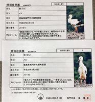 鳴門市がコウノトリの幼鳥2羽に発行した特別住民票