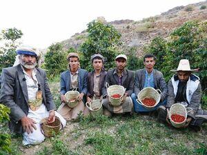 小原博さんが契約しているイエメンのコーヒー栽培農家。収穫している豆はモカ(小原さん提供)