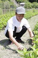 「農作業は大変」宍喰中生が職場体験