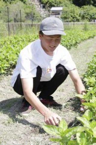 「農作業は大変」徳島県宍喰中生が職場体験