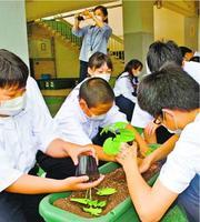 ゴーヤーの苗を植える板野中の生徒=板野町大寺