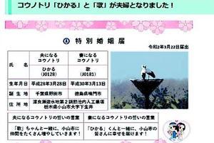 「歌」と「ひかる」の特別婚姻届を紹介する栃木県小山市のホームページ