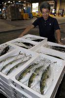 鳴門地方卸売市場に持ち込まれた魚=鳴門市里浦町