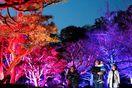 徳島市第2副市長「LEDフェス開催は困難」 本年度…