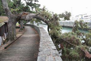 「藩政時代の松並木」の枝が折れ、通行止めとなった大岡川沿いの遊歩道=徳島市住吉1