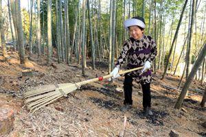 観光たけのこ園のオープンに向け、竹林を手入れする佐野本会長=阿南市新野町