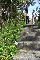 イシマササユリが咲くトレッキングコース=阿南市沖の伊島