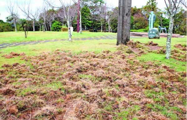 イノシシによって掘り返された芝生。右奥はモラエス像=徳島市の眉山山頂