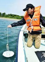海水の透明度を調べる市職員=阿南市畭町の淡島海岸沖