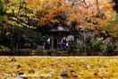 とくしま写真日記~故郷を撮り残す<30>大山寺