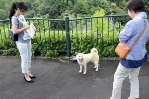 24日の譲渡会でも譲渡先が見つからなかった被災犬「さやか」=神山町阿野の県動物愛護管理センター