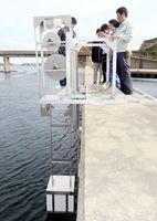 伊島で実用化に向けて取り付けられた「岸壁設置型」の試作機=阿南市伊島町
