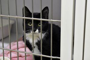 県動物愛護管理センターに収容された猫。多頭飼育の崩壊に伴って収容数が急増している=神山町