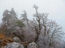 那賀の高城山で霧氷