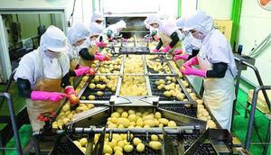 ジャガイモの芽を取る熟練スタッフら=徳島市の大塚食品徳島工場(同社提供)