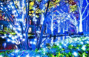 約35万個のLEDでキャンパス内の木々が青や白に浮かび上がる=徳島市山城町の徳島文理大(地図<2>)