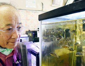 放流するために谷﨑さんが人工ふ化させたオヤニラミの稚魚=阿南市新野町馬場