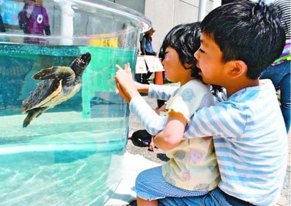 ウミガメを観察する子どもたち=美波町日和佐浦の日和佐うみがめ博物館カレッタ