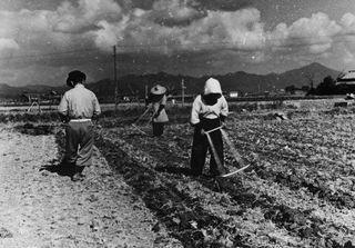振り馬鍬(1955年)