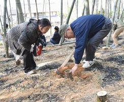 タケノコ農家(右)に掘り方を教えてもらう参加者=阿南市新野町