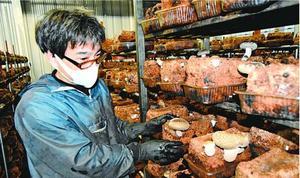 菌床シイタケを栽培する三セク「上勝バイオ」。経営再建が急務だ=上勝町旭