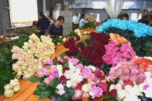 母の日を前に出荷最盛期を迎えているバラ=海陽町富田の岡松バラ園