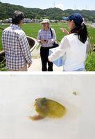 [上]水田を調査し、関係者と話すガン・リ教授=石井町石井 [下]採取したカイエビ