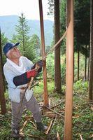 海布丸太の皮むき間伐に取り組む藤田さん=那賀町長安