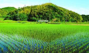 初夏の青空の下、緑が鮮やかな景色の中を、JR牟岐線の列車が駆け抜ける=阿南市桑野町