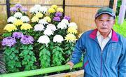 四国菊花品評会 田村さん(徳島・吉野川市)が第1席 背丈整え映える大輪