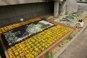 花で「J1 VORTIS」の文字が描かれた花壇=鳴門市の鳴門ポカリスエットスタジアム