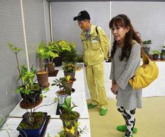 会員が育てた草花を見る来場者=小松島市松島町の市中央会館