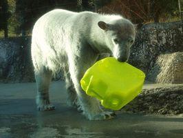 貸し出し期限の延長が決まったポロロ=徳島市のとくしま動物園(園提供)