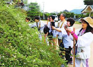 花を咲かせ始めたハギを観賞する参拝者=美馬市脇町の最明寺