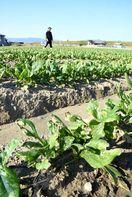 記録的な大雨・日照不足で農業打撃 10月の徳島県内