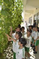 学びやに緑のカーテン 小松島小児童が育てる