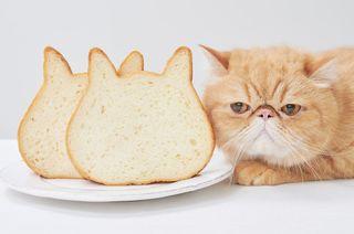 【新店情報】ねこねこ食パン、イオンモール徳島に2月14日オープン