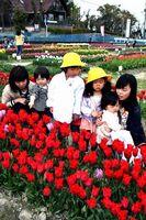 色とりどりの花に見入る親子連れ=北島町中村の北島チューリップ公園